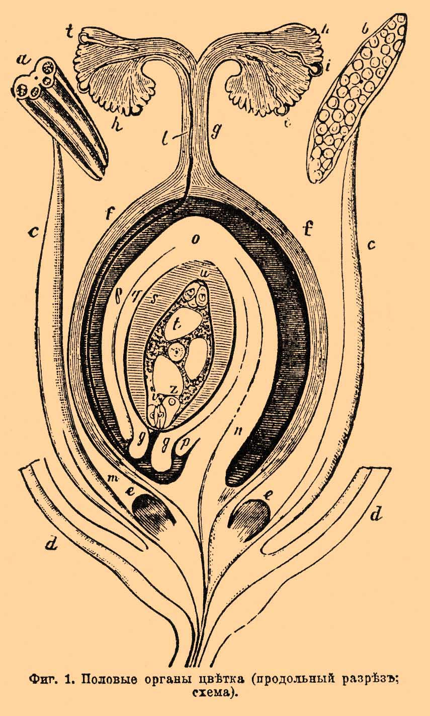 Размеры женских половых органов 6 фотография